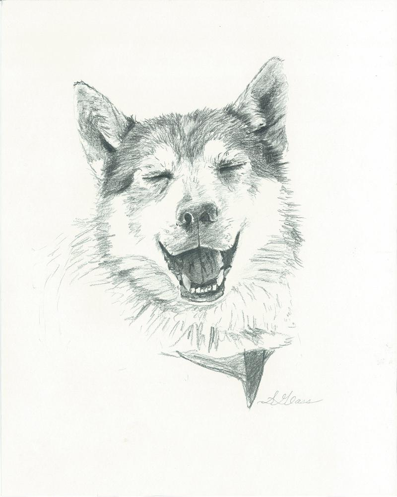 Smiling Husky- Alaskan Husky, Sled dog, Happy Dog, Iditarod, Dogsledding
